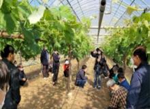 [칠곡]칠곡군농업기술센터, '아침해칠곡 농업인대학' 샤인머스켓 과정 현장실습 진행